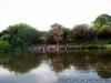 Banho no rio Zambeze, Zambia