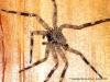 Aranha de companhia no bungalow